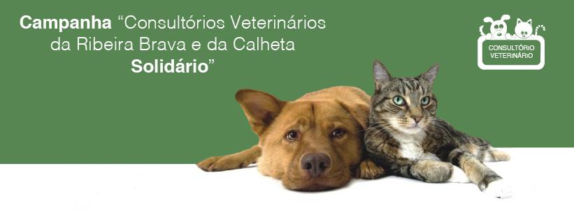 campanha_contra_abandono_624x312-01-copy